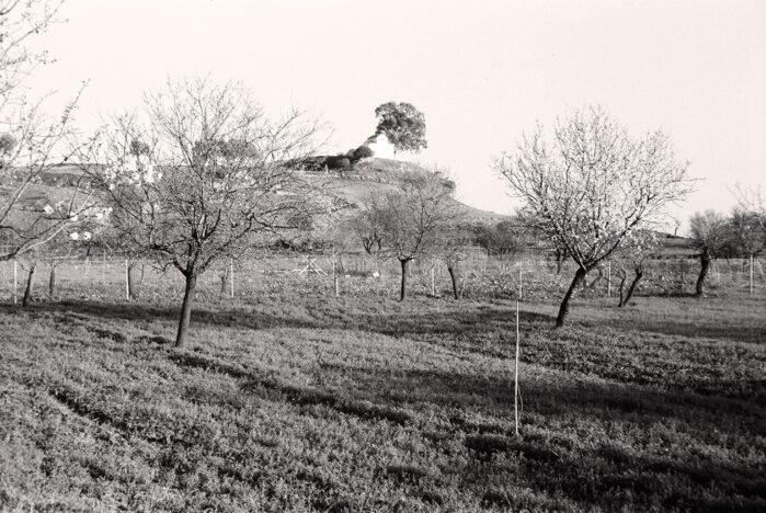 La colline de Paleoekklisies en 1969. La photographie est prise à l'emplacement exact du temple d'Artémis…,